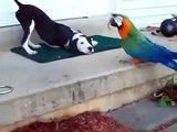 Hund und Papagei,spielen zusammen!