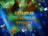 les fossiles réfutent la théorie de l'évolution -05- exemples de fossiles vivants trilobite