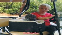 Dog Golf Cart Seat - Golf Cart Lookout for your Dog - Large Reviews