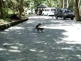 monkey forest@bali