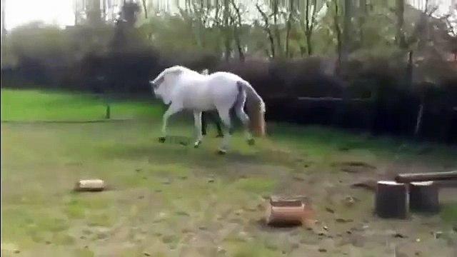ضربة قوية من حصان لفتاة