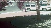 Macka spasila dijete od napada psa