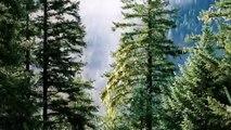 Innovation Trends - Forest-Based Sector Technology Platform