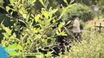 L.A Pépite - Alain Rey et ses abeilles en Brière, l'écosystème des marais