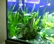 My crazy shrimps