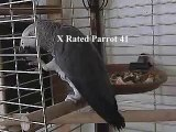THE African Grey! Ruby, The swearing parrot. X Rated Parrot 41.