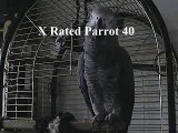 THE African Grey! Ruby, The swearing parrot. X Rated Parrot  40.