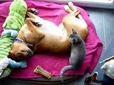 Chien fou crazy dog crazy cat