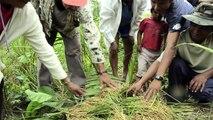 Chiquitanía: Huertas orgánicas y cusi: la Chiquitanía de Bolivia se adapta al cambio climático