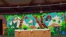 reportage  les perroquets au monde sauvage d'aywaille