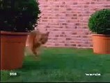 Cat And Dog Very Funny Fight   Funny Animal Clips