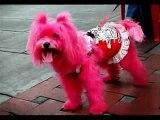 UNGLAUBLICH!! Lustige Hunde (echt Lustig,Haustiere,Tierliebhaber)