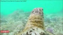 La Grande barrière de corail filmée depuis la carapace d'une tortue