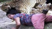 10 INCREIBLES ATAQUES DE ANIMALES A PERSONAS