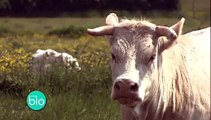 L'agriculture biologique - Contrôles sur les exploitations bio (Minute Bio)