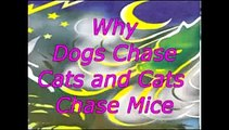 Why Dogs Chase Cats and Cats Chase Mice