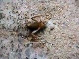 Sri Lanka,ශ්රී ලංකා,Ceylon,Ants,Ameise,Fourmi in action
