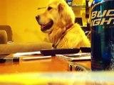 Perro le gusta escuchar tocar la guitarra =D