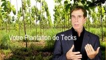 Placements écologiques, plantations de tecks et cacao