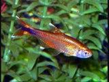 Mes poissons exotique d'eau douce pour aquarium