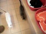 chats des amandiers 2