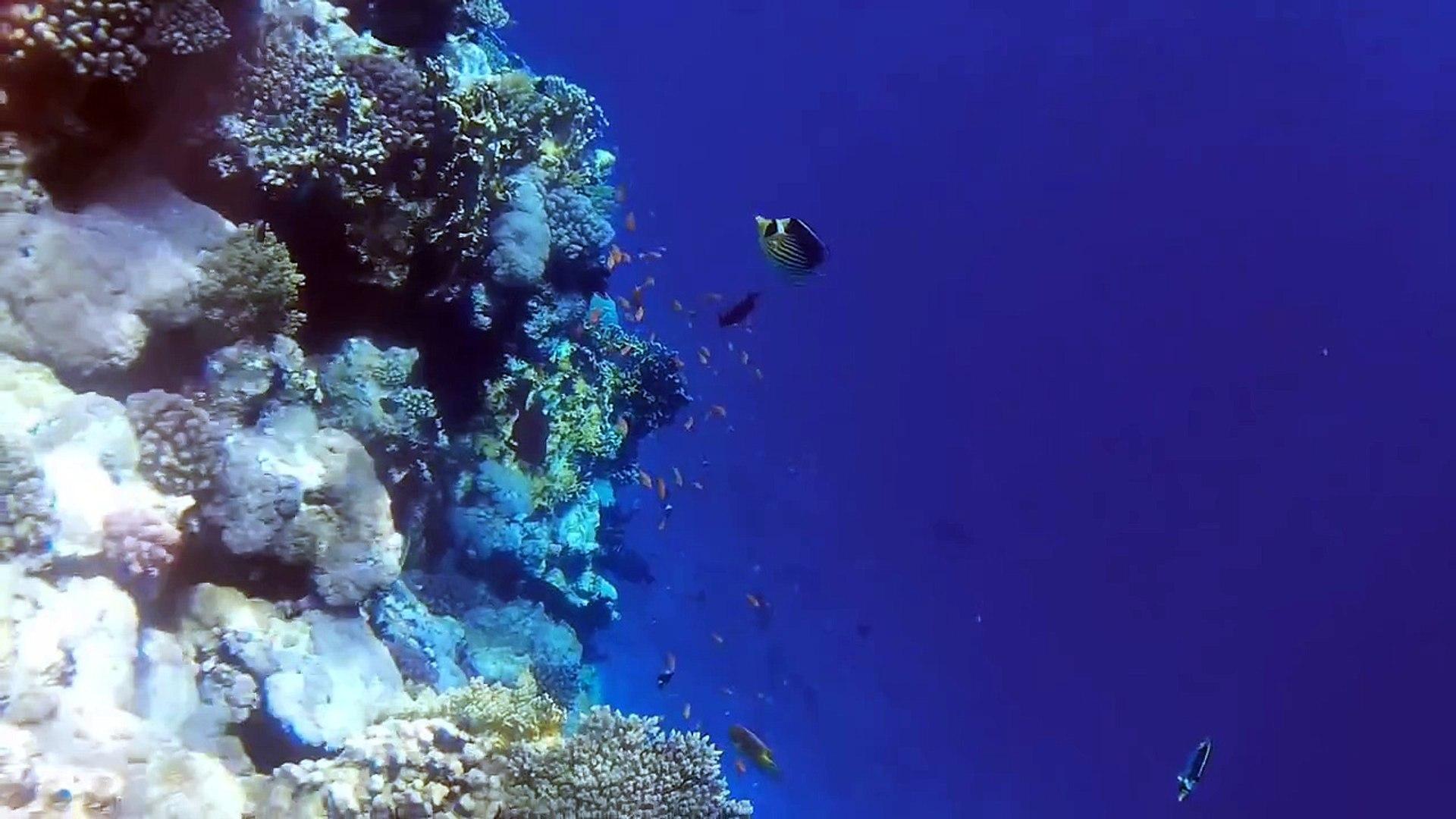 Египет. Отель Rehana Sharm Resort 4*. Территория