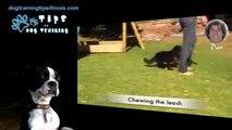 FREE DOG TRAINING VIDEOS ONLINE BEST PUPPY TRAINING VIDEO YouTube