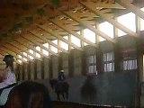 My horseback riding lessons[western] 7/24/08