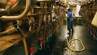 Livestock Supplies Ltd