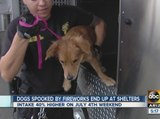 Dogs spooked by fireworks often end up at shelters