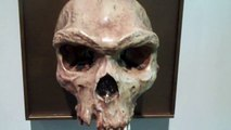 Homo Heidelbergensis and Homo Sapiens Skulls.MP4