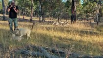 Save Fraser island Dingoes Inc. Dingo Whisperer  with domesticated dingo puppies.mpg. 06