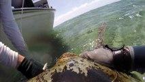 La Grande barrière de corail vue depuis le dos d'une tortue