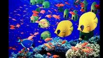 La Grande Barrière de Corail Australie