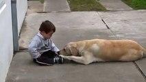 Ce que fait ce chien pour ce petit garçon atteint du syndrome de Down est incroyable