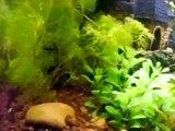 my fishies :) .. 20 gallon freshwater aquarium.