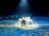 Le monde du spectacle equestre - L'art equestre