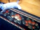 old clip from 2004 baby elvis aaron presley