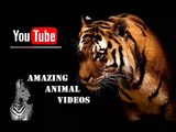 Animal Planet  | Discovery Channel | Wild Life Documentary 2015 | National Geographic Wildlife #16