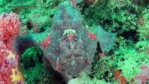 """Kokay's Maldito Dive Resort"", Malapascua island, Cebu, Philippines"