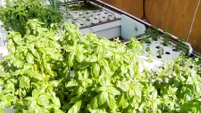 Aquaponics Go Commercial Start Small