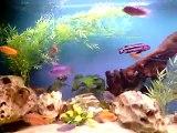 Aquarium cichlidés malawi 600 litres