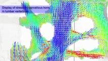 Microscale Simulation Technology : Takano Group, Keio University
