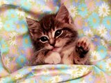 A...mici Gatti Chats Katzen Cats
