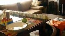 rally de domino que me sirve el cereal breakfast making domino rally