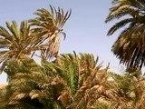 Dahab en Egypte sur la péninsule du Sinai ( Tour du monde voyage voyages vacances sejour )