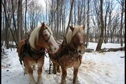 Horse Logging with Sarah and Eric