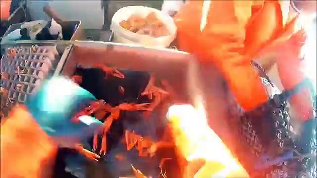 prawn creel fishing by head cam