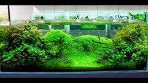Fish Tank Decorations | Cool Fish Tank Decorations | Fish Tank Decoration Ideas