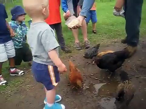 Henry & the Chickens